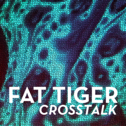FAT TIGER Crosstalk